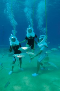 Cabo Expeditions Tours and Activities