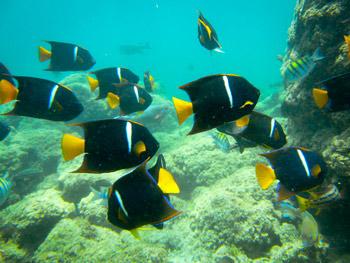 Diving in Los Cabos Mexico