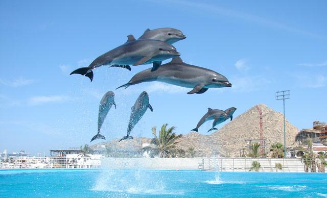 Cabo Dolphins Cabo San Lucas