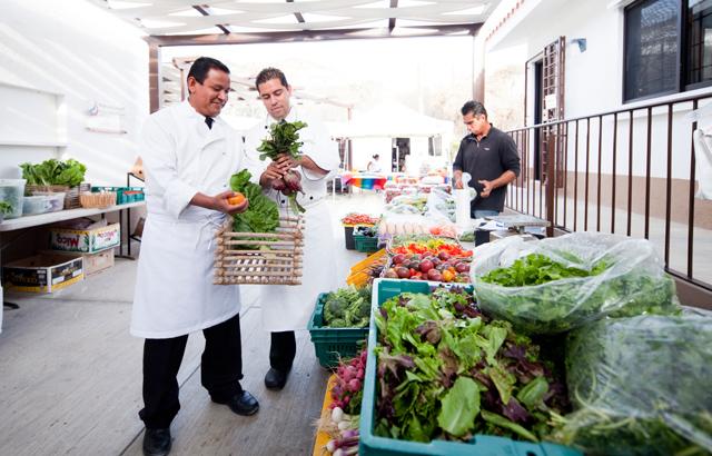 The Cabo Organic Farmers Market Los Cabos Mexico