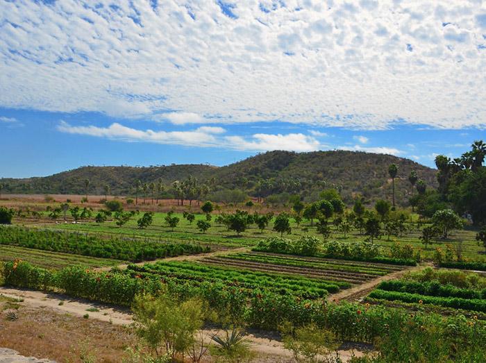 The lush organic farm at Los Tamarindos Los Cabos Mexico