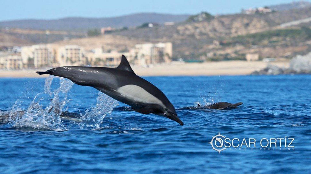Zippers Cabo San Lucas Coast of Cabo San Lucas