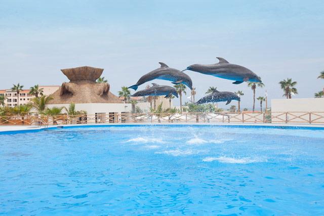 Cabo Dolphin Tour