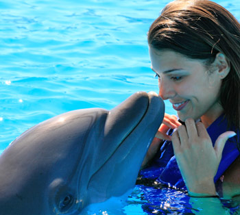 Cabo Dolphins Tours in San José del Cabo