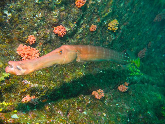 Scuba Diving Tours in the Sea of Cortez Baja California Sur