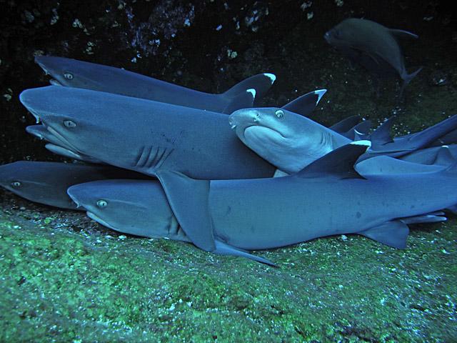 Scuba Diving at Socorro Island and Roca Partida