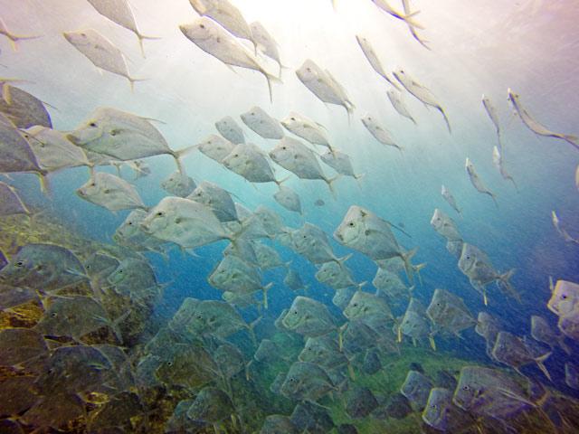 Snorkeling at Chileno Bay Los Cabos
