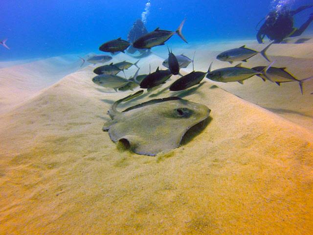 Diving in Cabo San Lucas Mexico