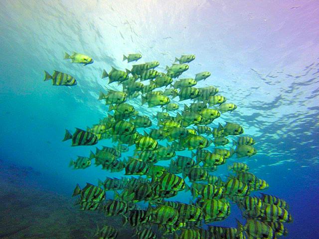 Snorkeling at Chileno Bay in Los Cabos, Mexico