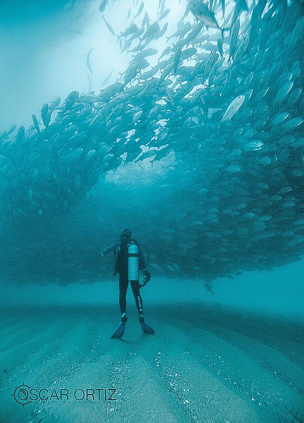 Diving at Cabo Pulmo Mexico
