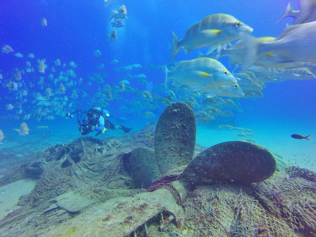 Diving near a shipwreck at Cabo Pulmo