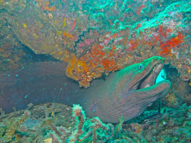 moray eel at Cabo Pulmo