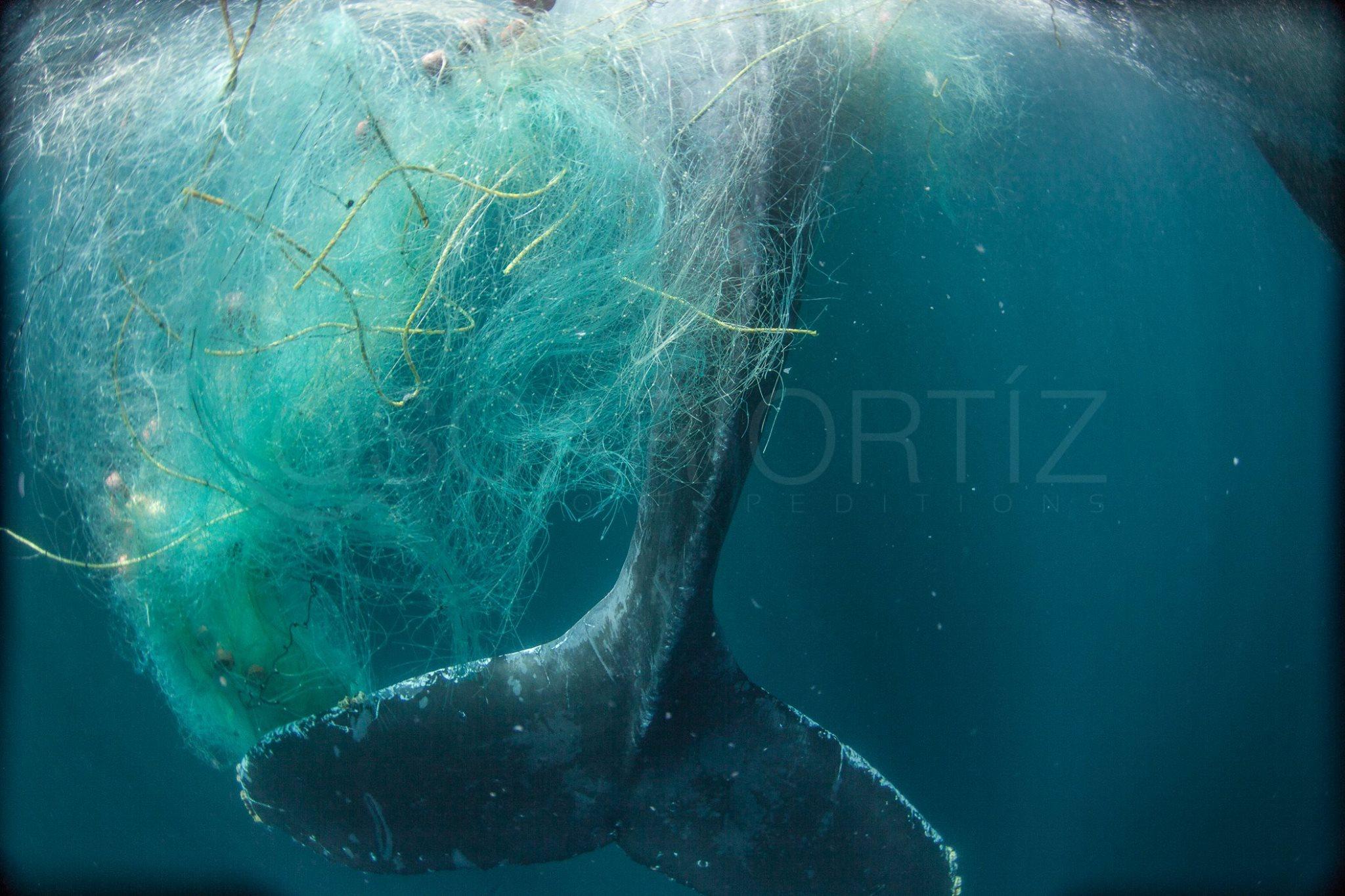 Whale rescue in Los Cabos Mexico