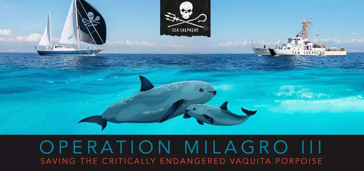 Save the critically endangered vaquita porpoise