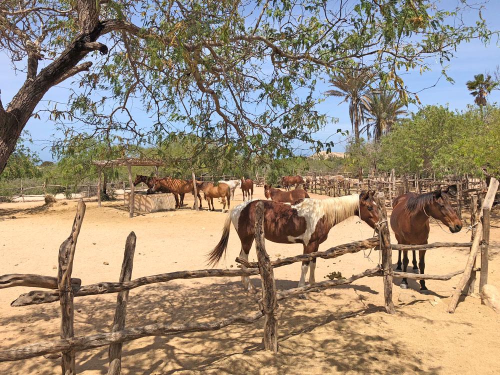 Horse ranch in Los Cabos Mexico