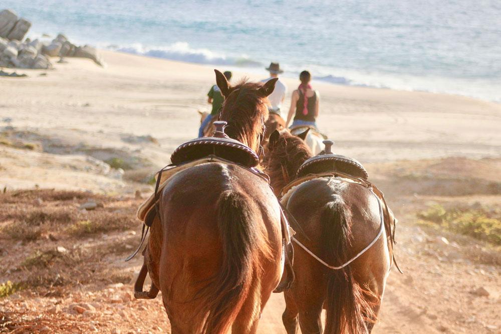 Horseback riding in Cabo San Lucas Mexico
