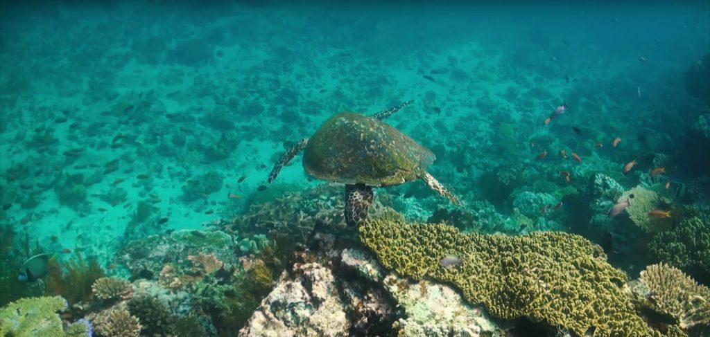 Cabo San Lucas Mexico Vacations
