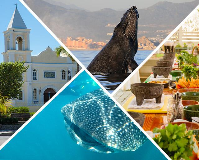 Top 4 Winter Activities in Los Cabos Mexico