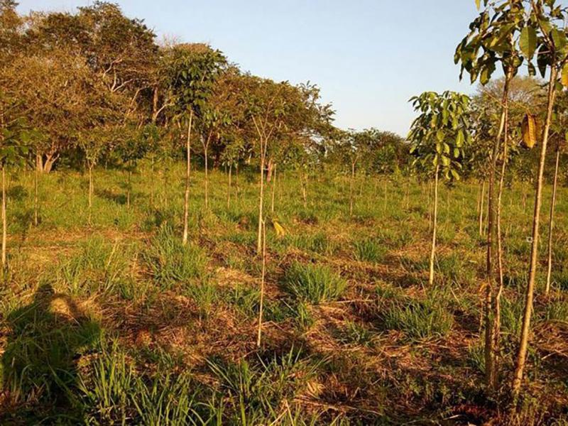 Fighting deforestation in Mexico and climate change