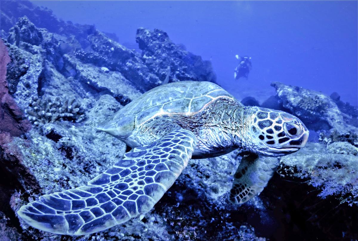 Diving in Chileon Bay in Los Cabos Mexico
