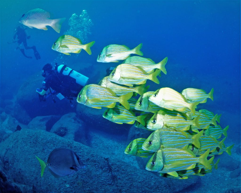 Scuba Diving in the Sea of Cortez at Cabo Pulmo Marine Park in Baja California Sur Mexico