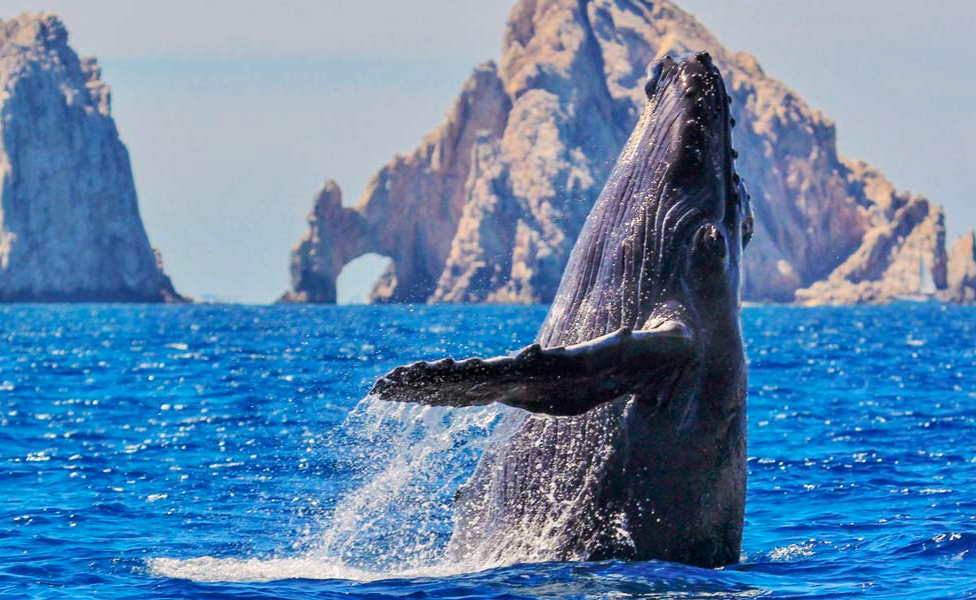Whale watching in Cabo San Lucas Mexico